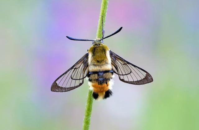 All the Moor Butterflies